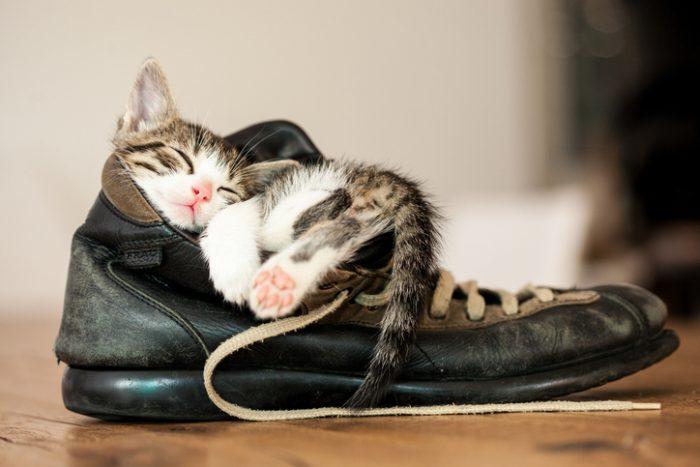 Så skyddar du katten från ormbett