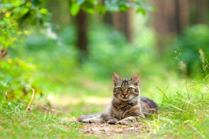 Så vänjer du katten vid att vara ute